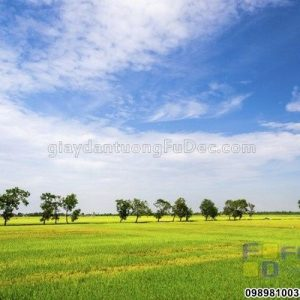 tranh-dan-tuong-thien-nhien-D0256 (Copy)